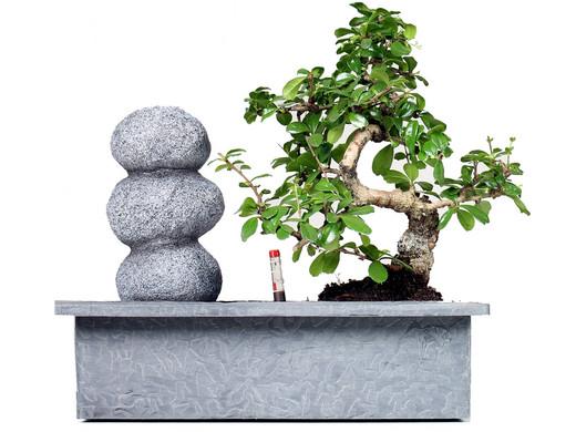 Bonsai Boom Verzorgen : Bonsai waterval balance stone internets best online offer daily