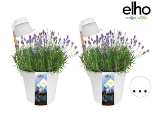 2x Elho Flower Light Blumentopf