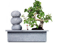 Bonsai Steinbalance