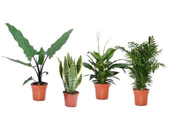 4 Pflanzen Schlafzimmer | Mix - Internet\'s Best Online Offer ...