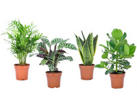 4x Kamerplant | Easy Care