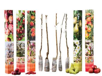 5x OH2 Fruitboom | Appel, Peer, Pruim, Zure Kersen & Perzik