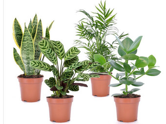 Perfect Plant Easy Care Mix