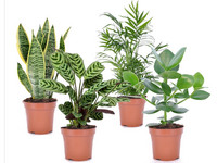 Easy Care Plantenmix | 25 - 40 cm